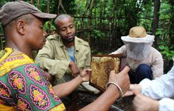 Checking hives with beekeeping technicians