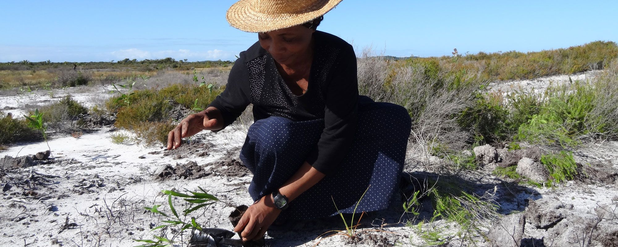 Planting trees for reforestation in the Anosy region of southeast Madagascar
