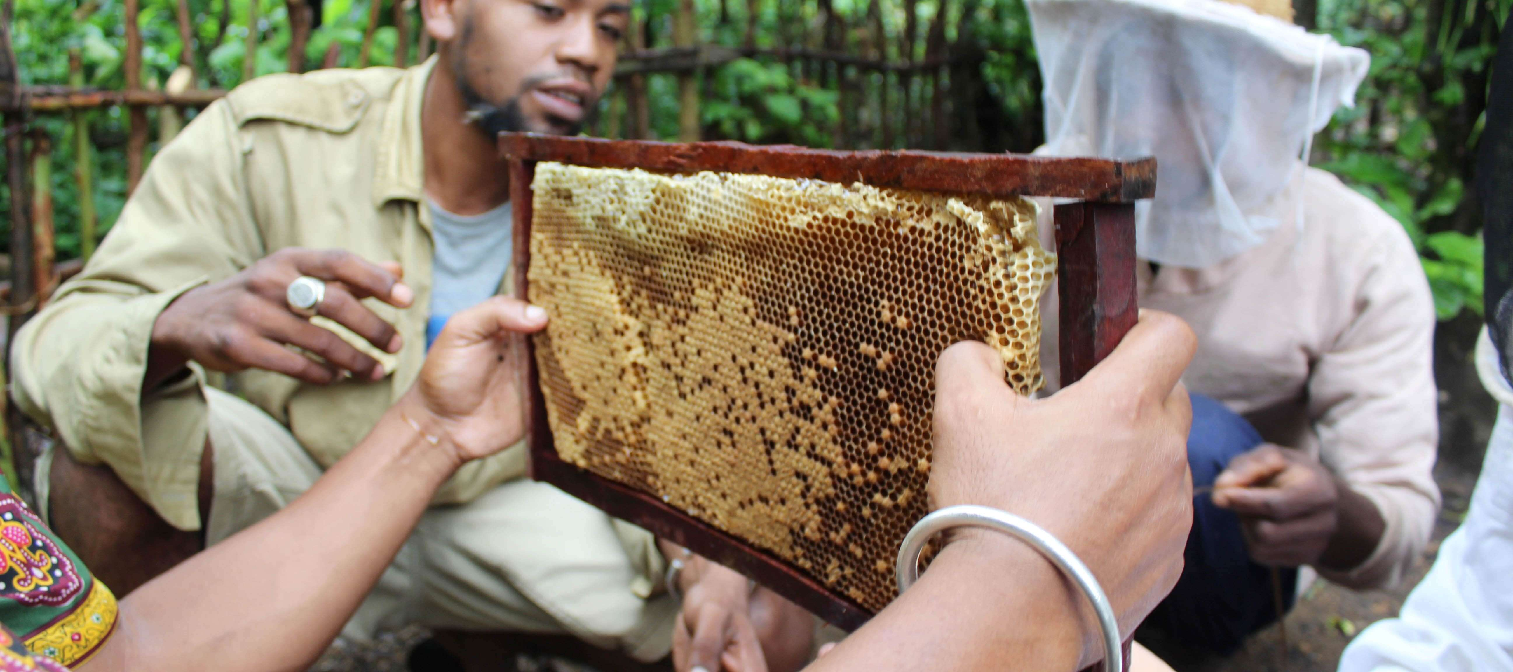 Beekeeping specialists demonstrate their techniques