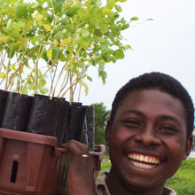 A young man with Moringa trees