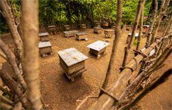 Bee hives near Mahatalaky, Anosy region, Madagascar