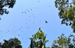 Colony of bats flying over a clearing